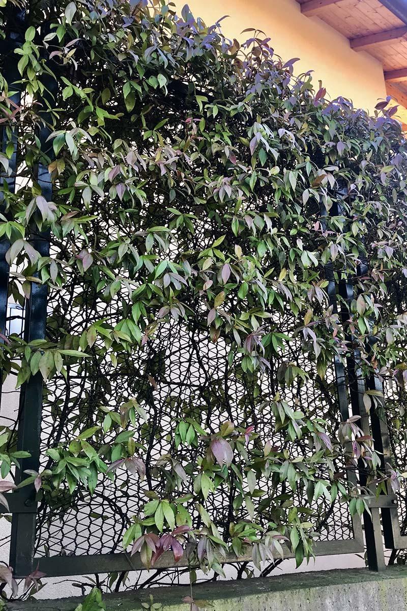 Utilizzo rete metallica per recinzioni